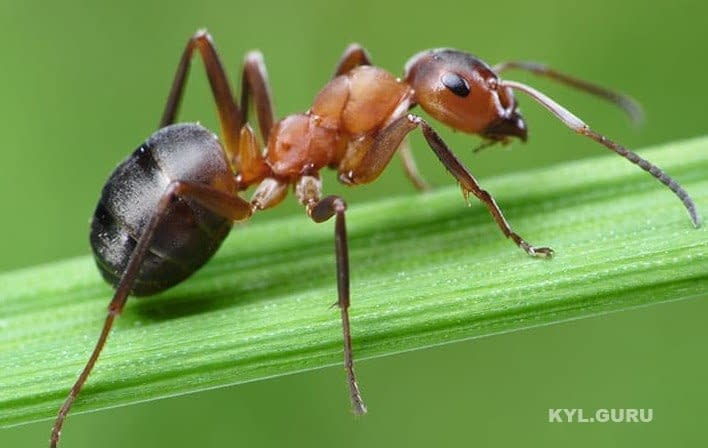 Почему плохо быть счастливым и продуктивным, как муравей?